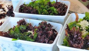 algues comestibles et bouillon de légumes maison